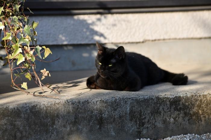 初恋 お父さん、チビがいなくなりました Only The Cat Knows (3)