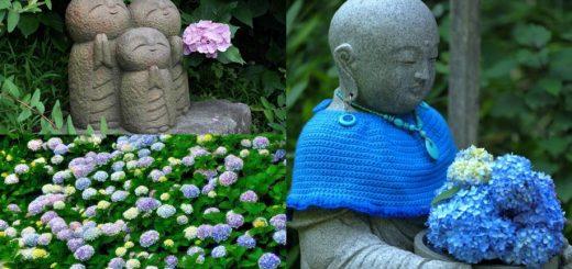 เที่ยวคามาคุระ แนะนำ 3 วัดที่ดีที่สุดสำหรับการชมดอกไฮเดรนเยียบานสะพรั่ง
