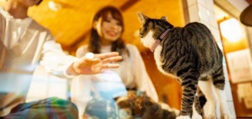 """""""Cat view"""" โรงแรมที่คุณจะได้ใกล้ชิดกับน้องแมว 24 ชม."""