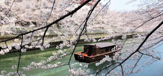 Hidden Places !! 7 จุดชมดอกซากุระซึ่งซ่อนอยู่ในโตเกียว