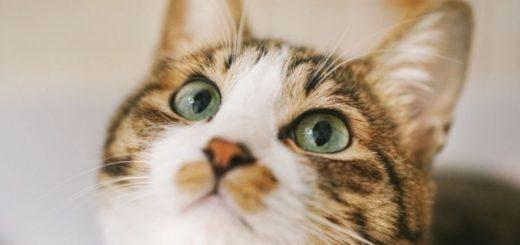รู้ไหมว่าที่ Kanagawa น้องหมา น้องแมว เค้ามีบัตรประจำตัวแบบดิจิทัลแล้วนะ