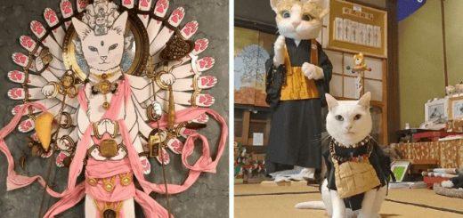 ศาลเจ้าแมวที่มีพระเป็นแมวจริง ๆ ใจกลางกรุง Kyoto